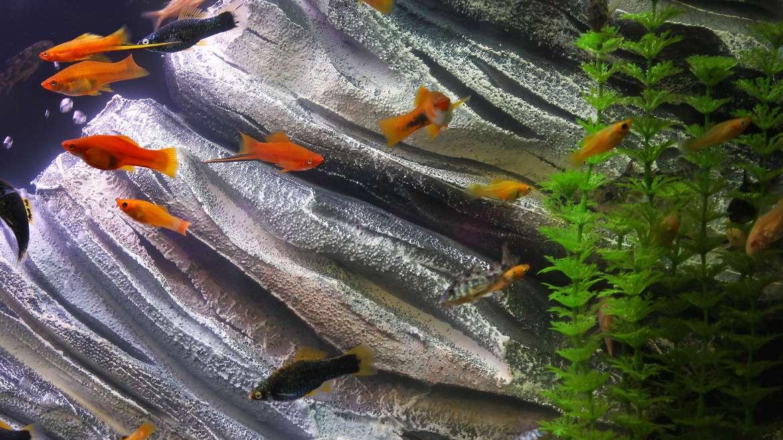 Tropical Fish Tips
