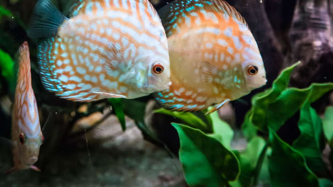Looking for aquarium specialists?