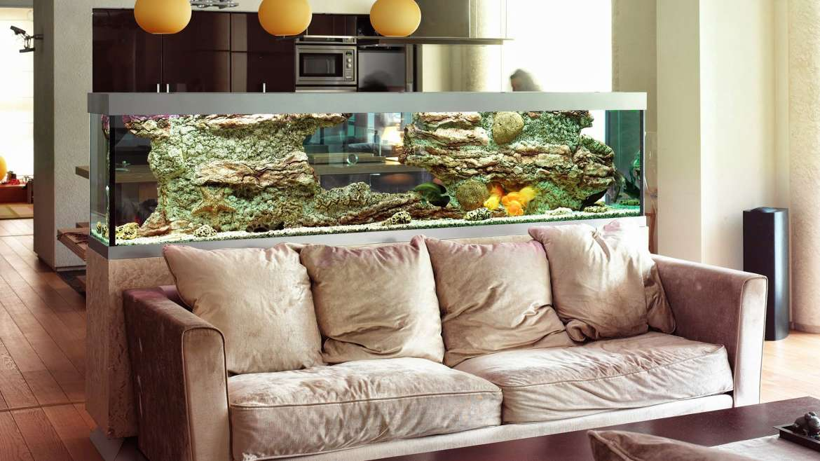Freshwater Aquarium Setups and Care