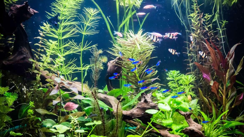 Aquarium Aquascape Design Ideas